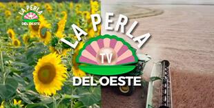 <p> La perla TV</p>