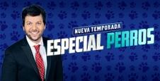 <p> A TODO O NADA &ndash; ESPECIAL PERROS</p>